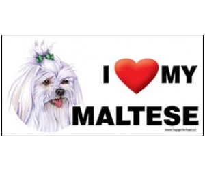 Car Magnet - Maltese with Bow