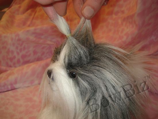Maltese+shih+tzu+haircuts