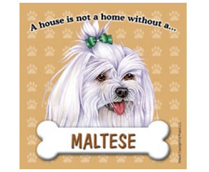 Fridge Magnet - Maltese with Bow