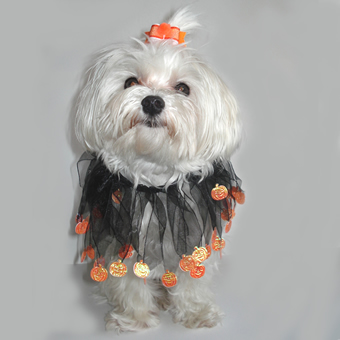 Halloween Pumpkins dog Bow Halloween Dog Bow White /& Orange Pumpkins Bow